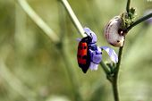 Beetle On Flower