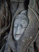 Buddha's Head Is Embeded In Tree Roots, A Beautifu And Popularedl Ancient Site In Ayutthaya As A Wor