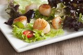Scallop And Leaf Salad