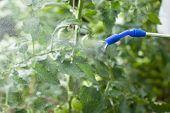 Watering Of Plants
