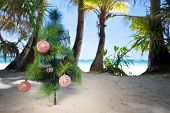 Christmas Tree On Beach