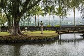 The garden in Hilo, Hawaii