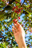 Hand with berries