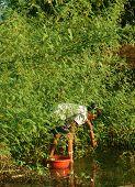 Vietnamese Pick Dien Dien Flower