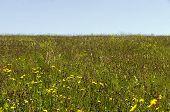 View of beauty flower field