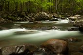 foto of smoky mountain  - A river flowing through a forest - JPG