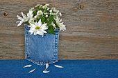 daisy bouquet in denim pocket