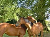 Beautiful Horses In Love