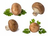 picture of champignons  - set of mushrooms champignon with green leaves isolated on white background - JPG