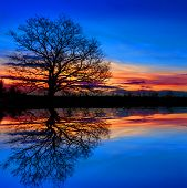 Tree against sunset sky with water reflection