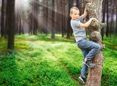 Little boy climbing on tree and enjoying summer holidays in the wilderness.