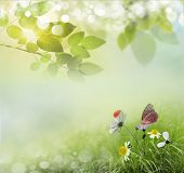 stock photo of photosynthesis  - Beauty natural spring background with daisies - JPG