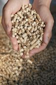 Alternative fuel: Pellets made from industrial wood waste. Short depth-of-field.
