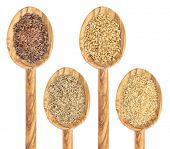 gold and brown flax seed and meal - isolated collection of wooden spoons