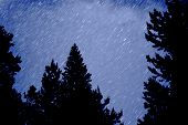 Star trails in blue night sky with pine trees silhouetted in front