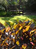 pic of pews  - Garden bench and plants photographed at Sidmouth in Devon - JPG