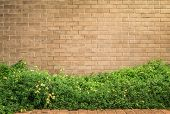 picture of lantana  - background and texture of vintage style decorative brown brick wall with Lantana camara or Cloth of gold - JPG