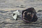 foto of broken heart flower  - Dried Rose on old wooden background broken heart concept - JPG