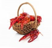 picture of crawfish  - crawfish in the basket isolated on white background - JPG