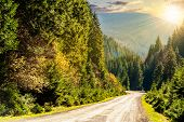 image of conifers  - asphalt road going in mountains and passes through the conifer forest in evening light - JPG