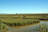 picture of boggy  - View at water and waterplants in the Delta - JPG