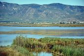 stock photo of boggy  - View at water and waterplants in the Delta of Ebro river in Spain and mountains - JPG