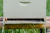 pic of bee keeping  - A white bee keeping box with honeycomb and bees wax peeking out - JPG