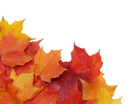 pic of fall leaves  - colorful fall leaves in the lower left corner - JPG
