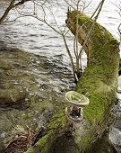Tree Fungus Art 2