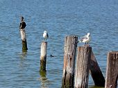 Sea Birds In The Sun