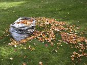Autumn - Bag Of Leaves
