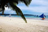 stock photo of olongapo  - A Palm Tree and beach scene Boracay Philippines - JPG