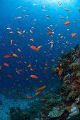 Chaotic Fish