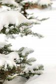 Snowbounded Xmas Tree