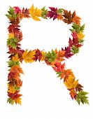 The letter R made from autumn maple tree leaves