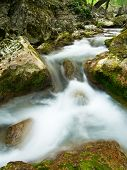picture of irish moss  - Woodland Stream  in the Grand Canyon of Crimea - JPG
