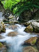 picture of irish moss  - Rapid woodland Stream in Sheffrey Wood Ireland - JPG