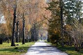 Beautiful Green Park With A Path. Autumn Park With Birches Along The Path. poster