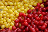 Red and yellow Cornelian Cherry - European Cornel fruits - Cornus mas species of dogwood. Eastern Eu