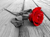 foto of white roses  - red rose on wood floow  - JPG