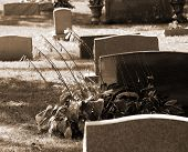 Life And Death In Sepia