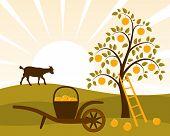 Apple oogst