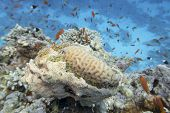 Colorful Coral Reef At The Bottom Of Tropical Sea, Underwater Landscape poster