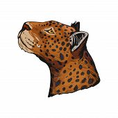 Leopard Portrait Of Exotic Animal Isolated Vector Illustration Sketch. Profile Of Panther Looking As poster