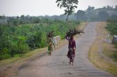 Indian Women Carrying Wood Branchs On Their Heads. Indian Girl Carrying Wood On Head At The Road, An poster
