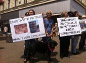 ZAGREB - MAY 26. Animal welfare protesters on Bana Jelacic square on Saturday 26th, 2012 in Zagreb,