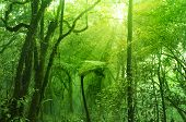 Bosques musgosos, cameron highlands, Malasia