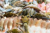 Lobsters, Langustines, Shrimp, Fish With On Ice. Seafood On Display. Counter With Seafood, Shrimp An poster
