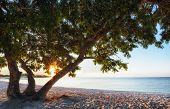 Tree On A Sandy Beach.