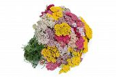 Bouquet Of Yarrow (lat. Achill?a), Isolated On White Background